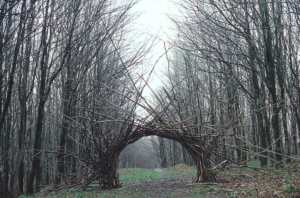 Branches formed into an arch in the woods